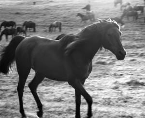 Cadence the Horse