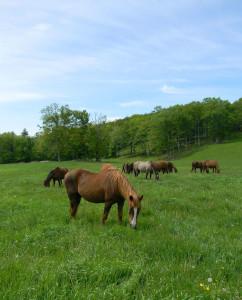 Chuck the Horse