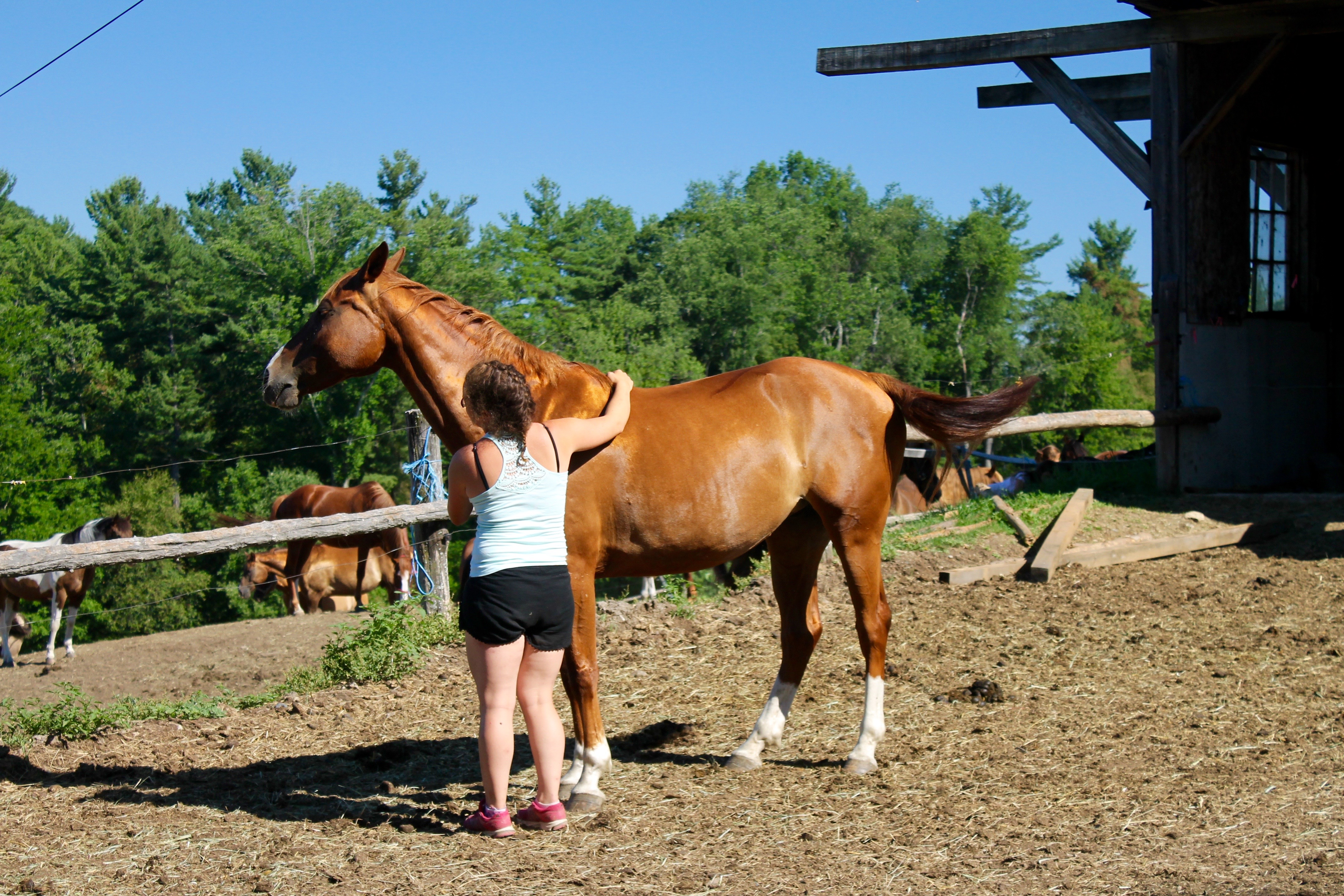 Summer Horse Camp For Girls | Road's End Farm