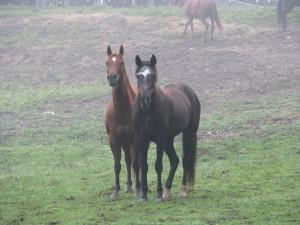 Mocha the Horse