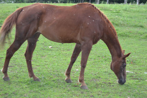 Sweet Pea the Horse