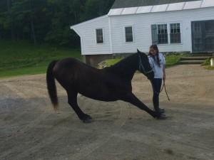 Ubi the Horse
