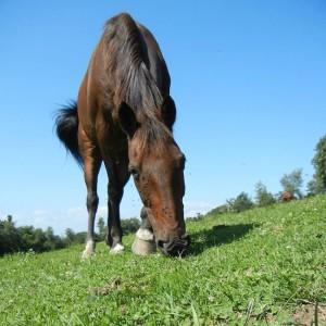 Union the Horse
