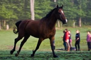 Windstar the Pony