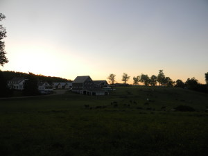 Horse Field at Sunset